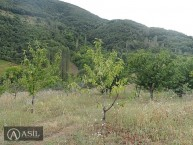 Հայկական գյուղ